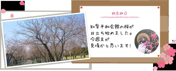 知覧平和会館の桜が目立ち始めました。